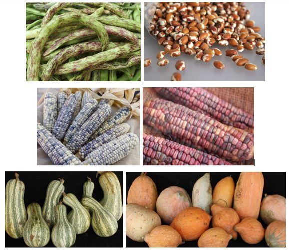 03 - Navajo crops