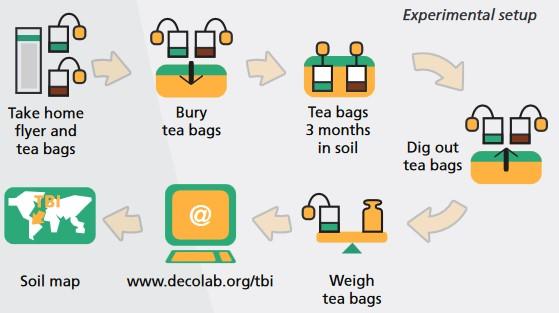 03.Tea bag index